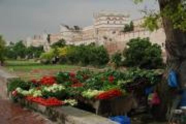 14-groenteverkoop-bij-de-oude-stadsmuur-van-istanbulD163D46D-5616-C0AE-A08B-ADA73282A01A.jpg