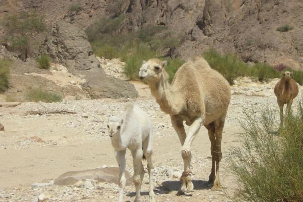 wadi-araba-jordanie4D2D746E-4715-397A-7B0A-BA210BF71407.jpg