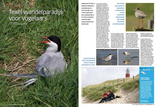 Texel wandelparadijs voor vogelaars